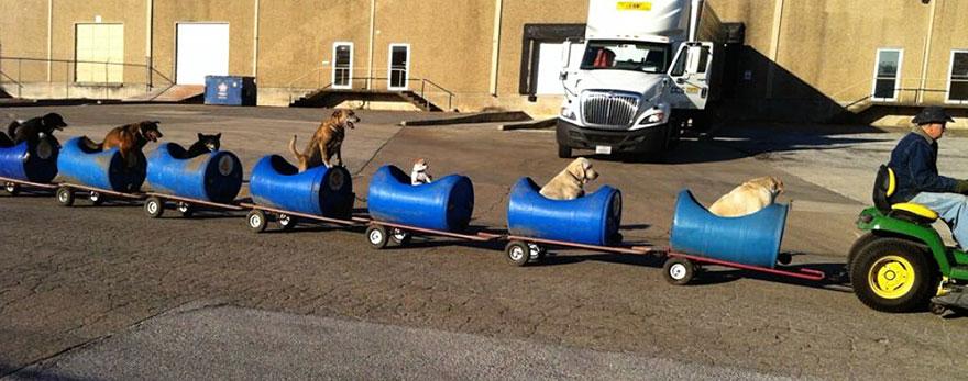 dog-train-2