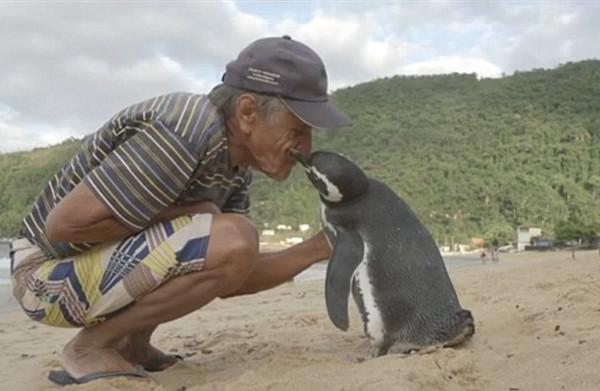 penguin-1